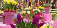 Экскурсия в парк цветов Кёкенхоф